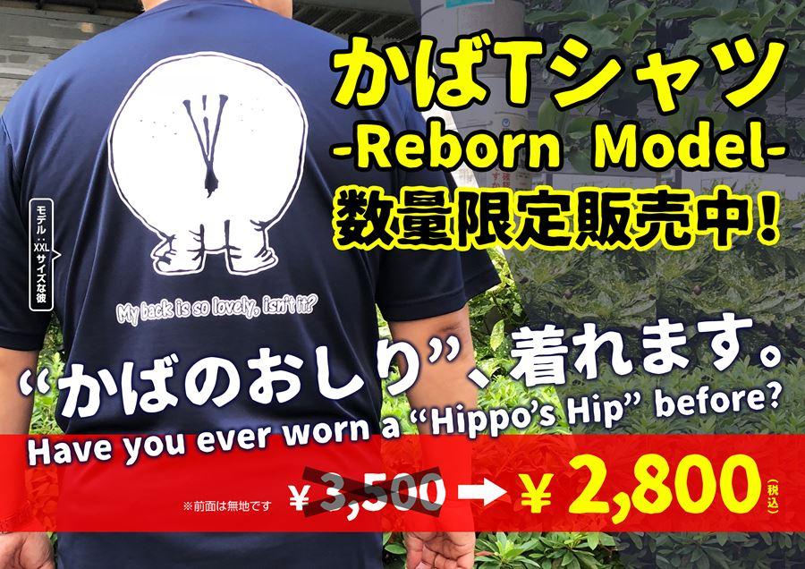 かばTシャツ-REBORN MODEL-販売中のPOP