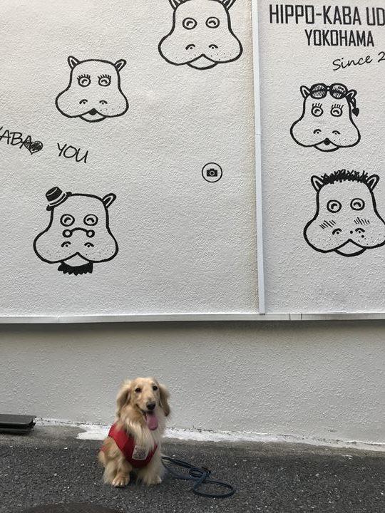 かばのおうどんの外壁に描かれているイラスト